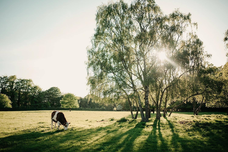 A pretty scene in Marbury Country Park in Northwich, Cheshire