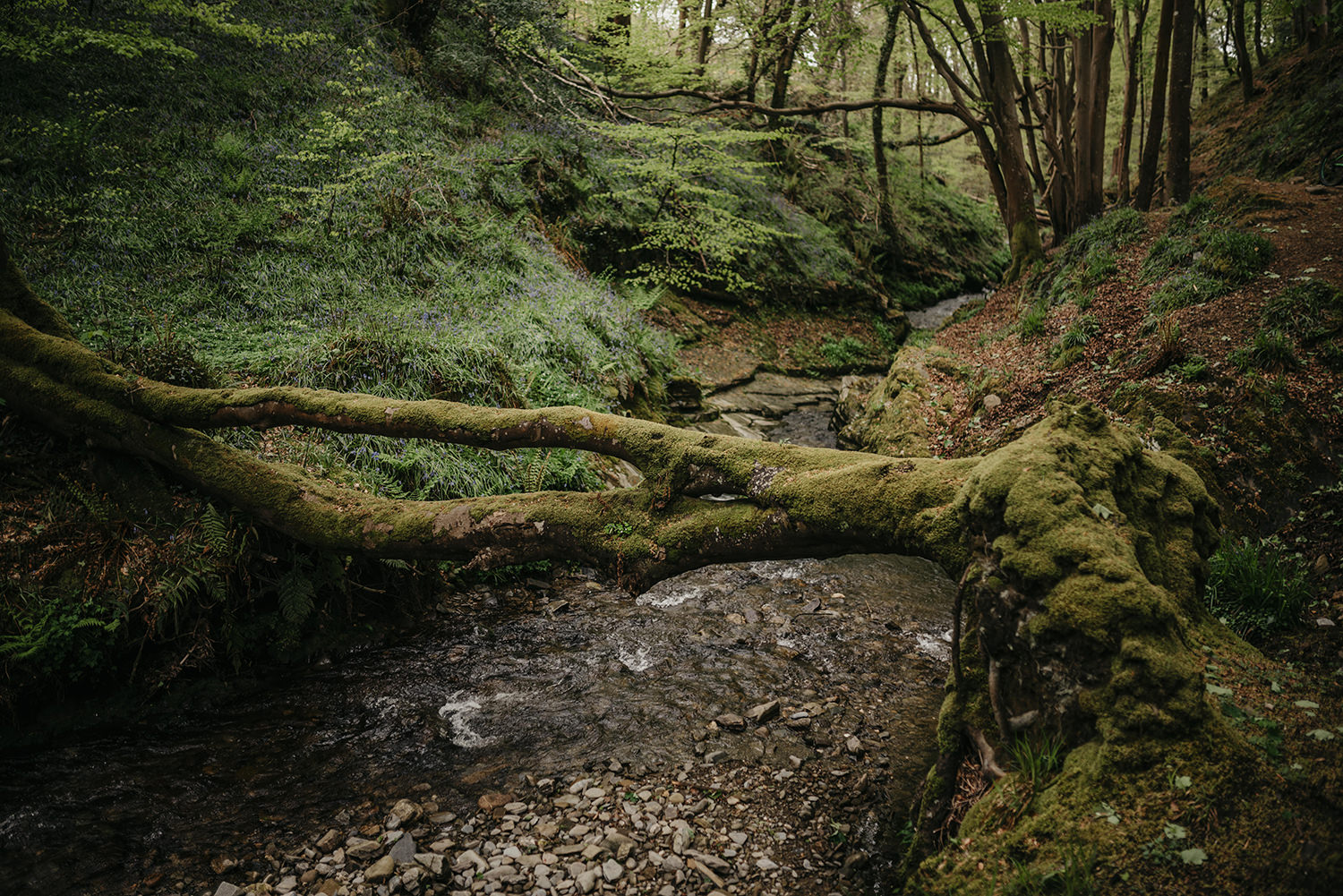 We decided to go for a walk in Groudle Glen for their photos